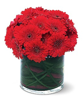 Red Gerbera Collection Flower Arrangement
