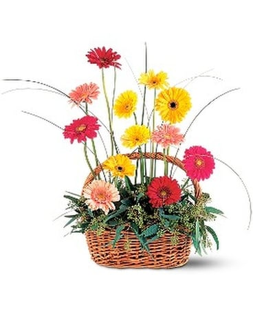Uplifting Gerbera Basket Flower Arrangement