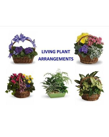Living Arrangements Plant