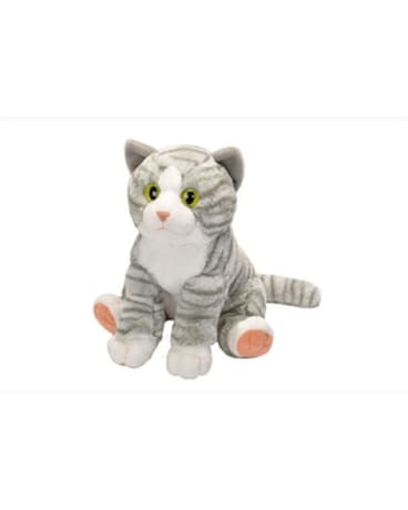 12 Grey Tiger Cat - by Reed's Florists Gifts