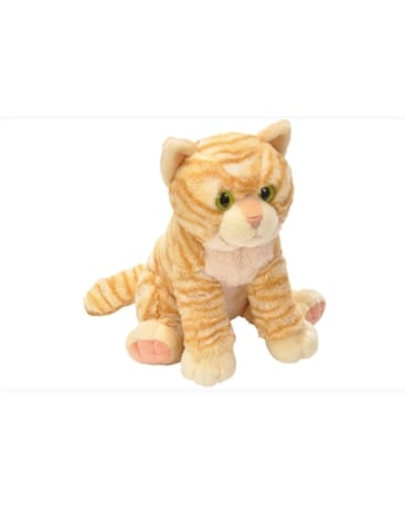 12 Tabby Cat - by Reed's Florists Gifts