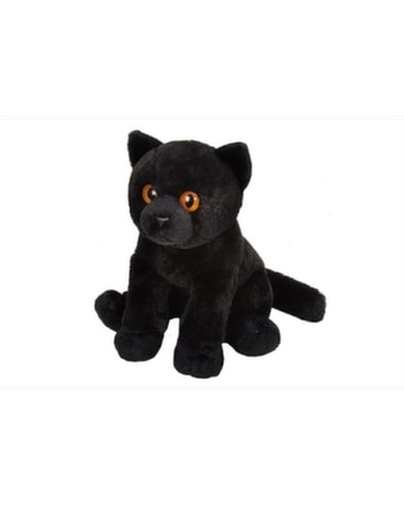 12 Black Cat - by Reed's Florists Gifts
