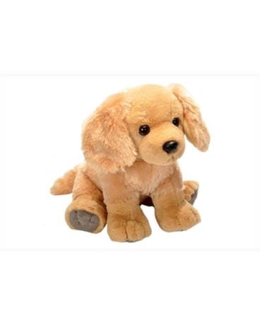 12 Golden Retriever - by Reed's Florists Gifts
