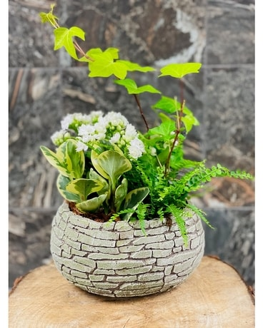 Stone Wall Succulent Dish Garden Plant