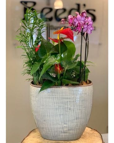 Orchid and Anthurium Planter Dish Garden Plant