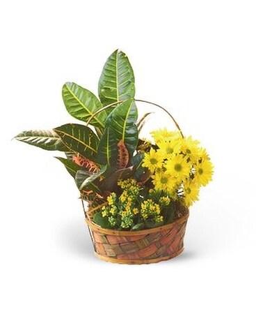 Croton Basket Garden Custom product ...