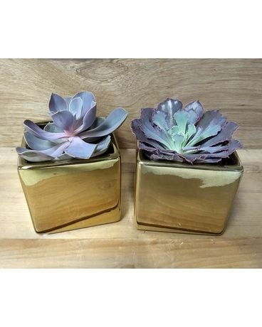 Succulent Duo Flower Arrangement