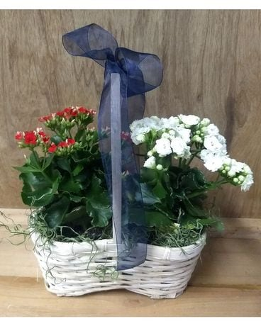 Red White and Blue Flower Arrangement