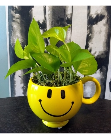 Happy Little Plant Plant