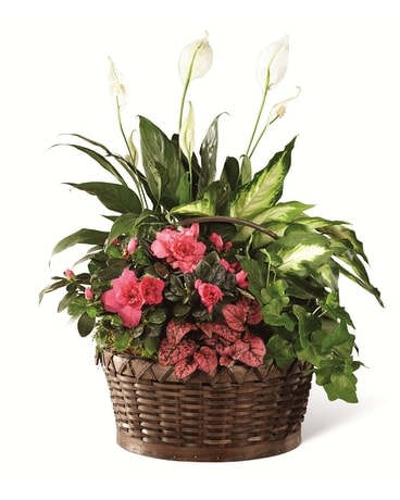 The FTD Dream in Pink Dishgarden Flower Arrangement