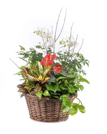 Deluxe Planter Flower Arrangement