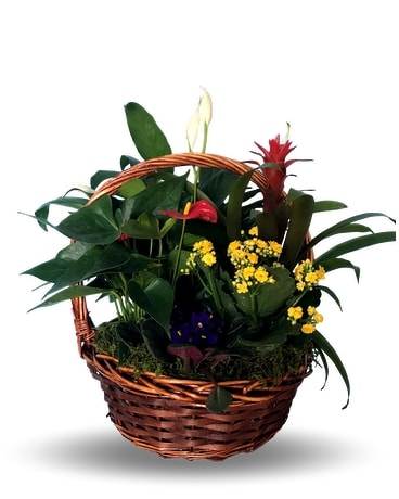 Orland Park Florist Flower Delivery In Orland Park By Mitchell S