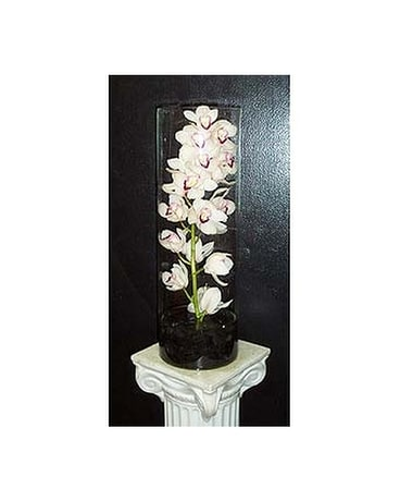 Cymbidium Orchid in Glass Vase