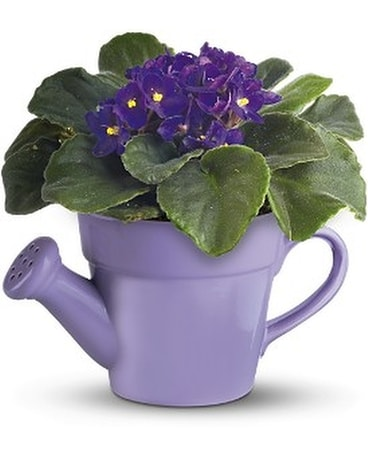 Teleflora's Spring Showers African Violet Custom product