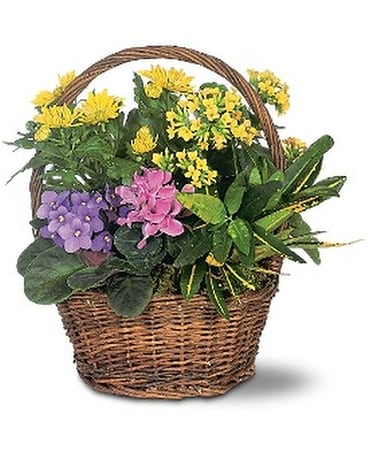 Petite European Basket Custom product