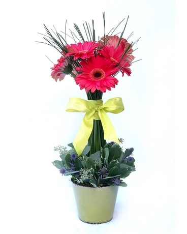 Gerbera topiary Flower Arrangement