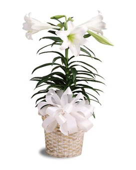 Easter Lily Basket Flower Arrangement