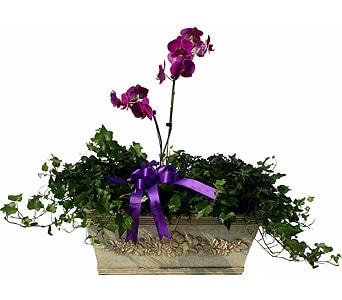 Luxury Collection Orchids & Ivy in Norristown PA, Plaza Flowers