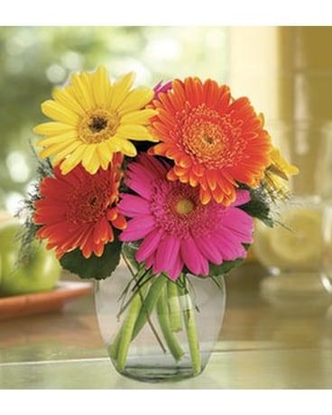 Fiesta Gerbera Vase In Glenside Pa Pennys Flower Shop