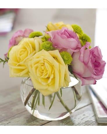 Pink lemonade roses in norristown pa plaza flowers pink lemonade roses mightylinksfo