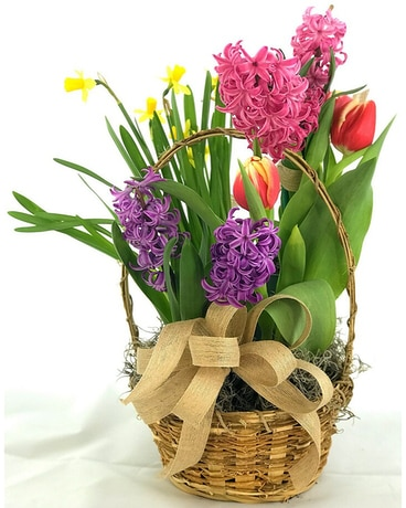 Blooming Bulb Basket