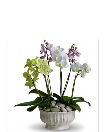 Regal Orchids in Norristown PA, Plaza Flowers