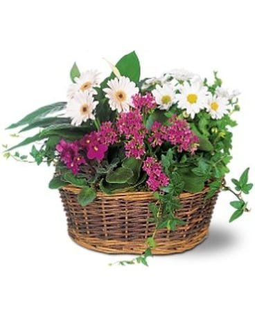 Traditional European Garden Basket Plant