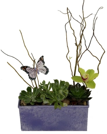 Butterfly Succulents Flower Arrangement