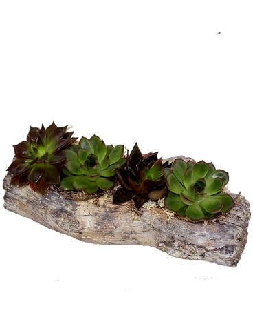 Driftwood Succulents Flower Arrangement