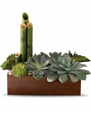 Peaceful Zen Garden Plant