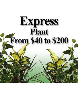 Express Plant Flower Arrangement