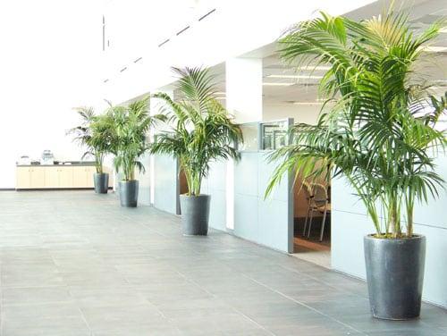 Interior Landscaping Gallery