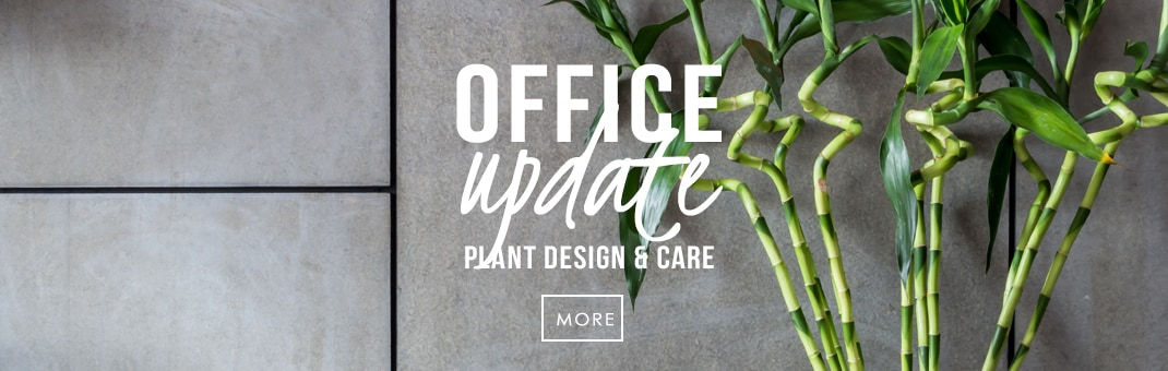 office plants dallas