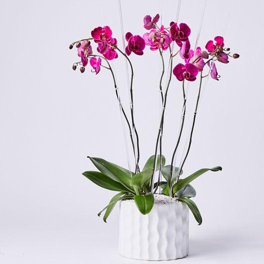 Dallas Florist Flower Delivery By Dr Delphinium Designs Events