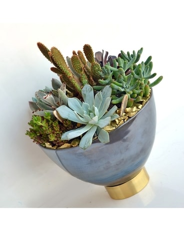 Princess & The Pea Succulent Bowl Flower Arrangement