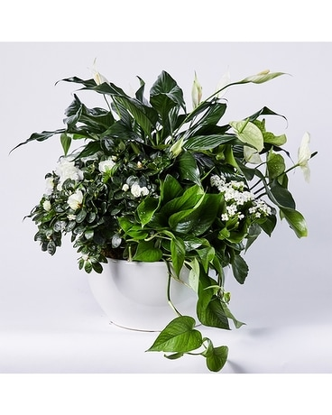 White Botanical Planter - in Ceramic Bowl Flower Arrangement