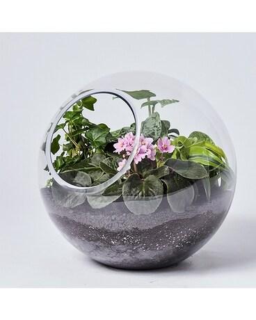 Greenhouse Plant Shop Succulents Terrariums Air Plants