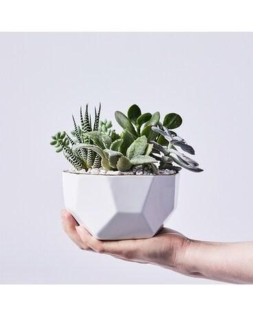 Greenhouse & Plant Shop | Succulents, Terrariums & Air Plants