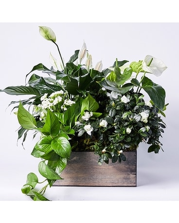 White Botanical Planter - In Wooden Crate Flower Arrangement