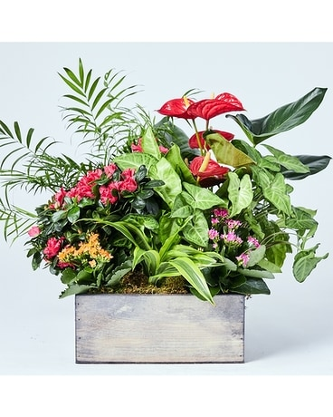 Aloha Planter - in Wooden Crate Flower Arrangement