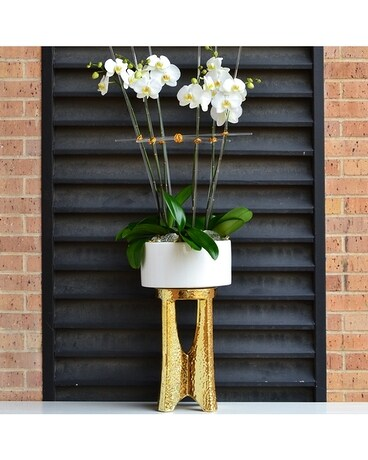 Orchids on Ice - Ultra Luxe Flower Arrangement