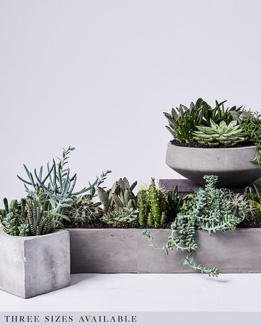 Stockholm Succulent Collection Flower Arrangement