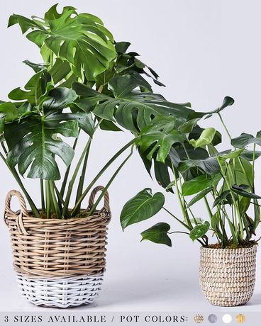 Monstera Flower Arrangement