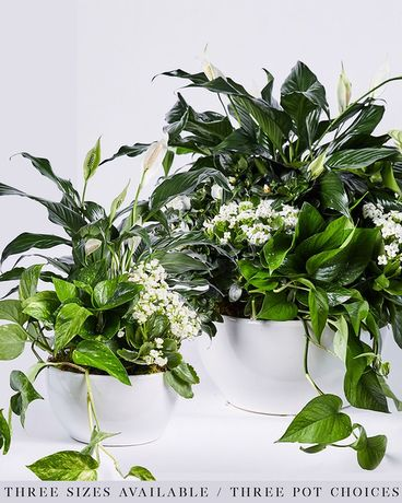White Botanical Planter Flower Arrangement