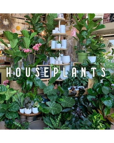Houseplants Plant