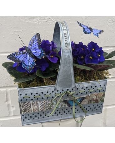 Artisan Violets and Butterflies Dish Garden Plant