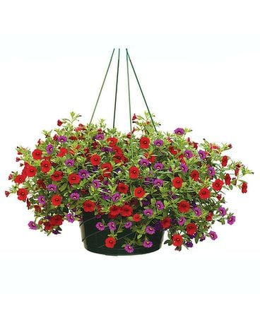 Hanging Basket of Annuals Plant