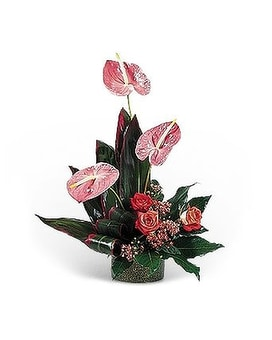 Hot Pink Anthuriums Flower Arrangement